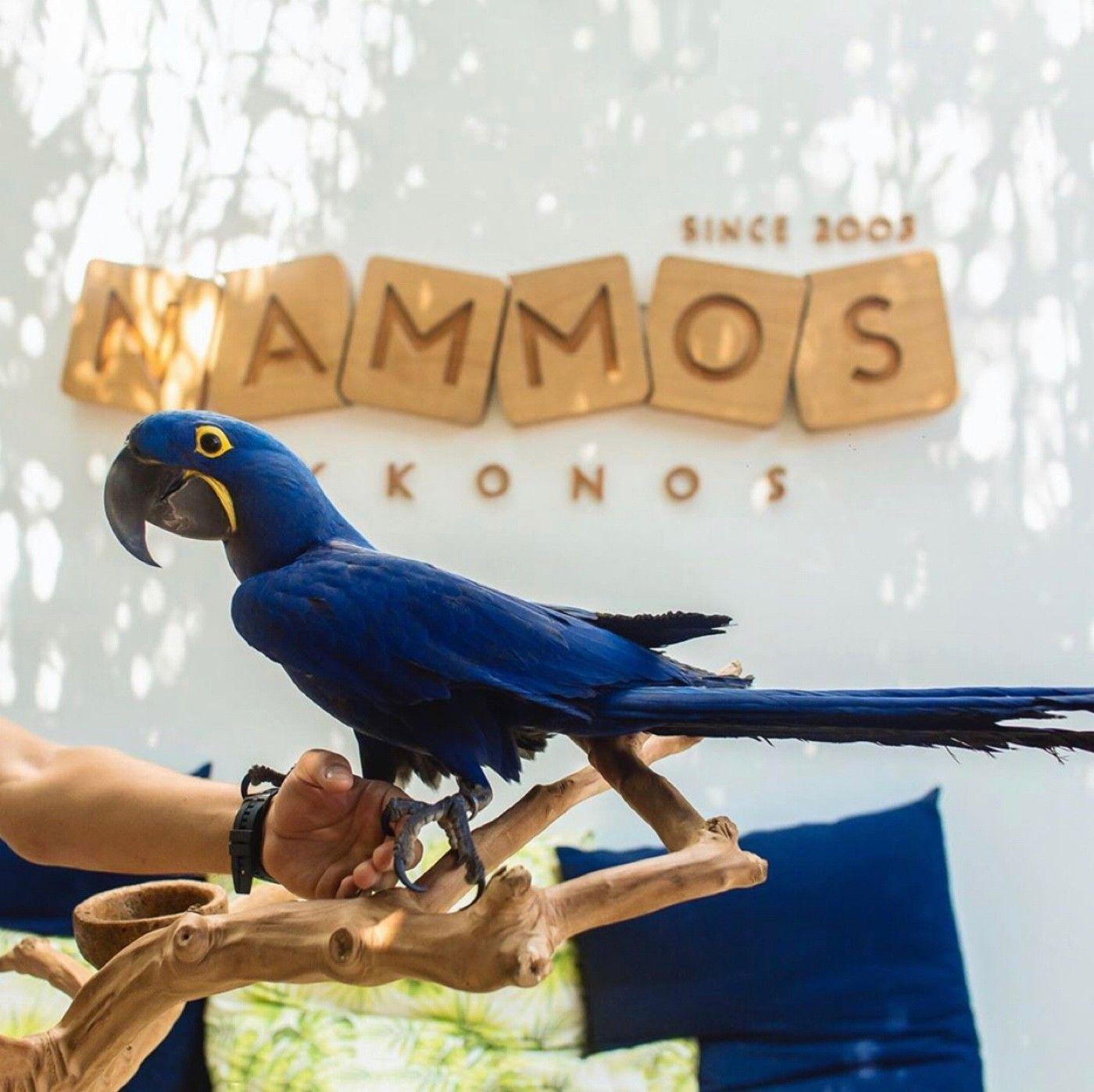 Shots from Nammos. A must when in Mykonos🥂