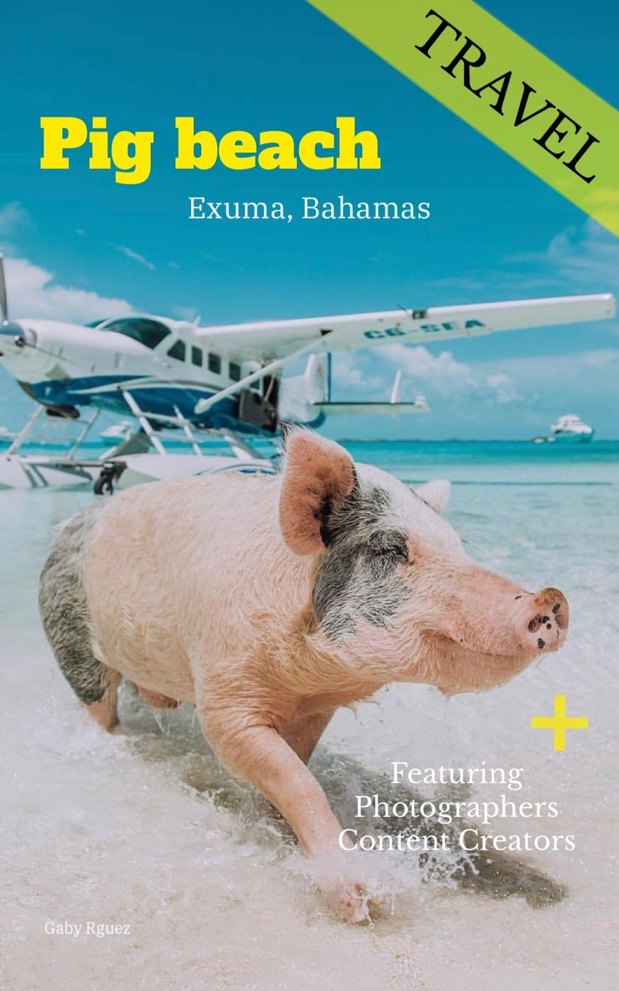 Featuring content creators and photographers | Pig Island 🐷