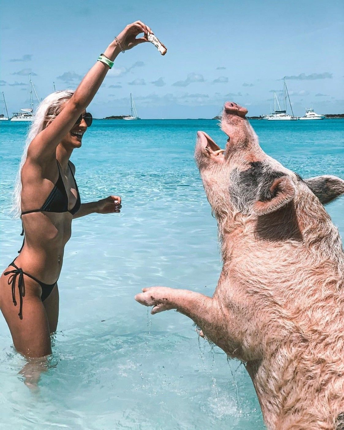 I must say, these pigs have the life. Eating all day while swimming in the Caribbean ocean 👌🏻