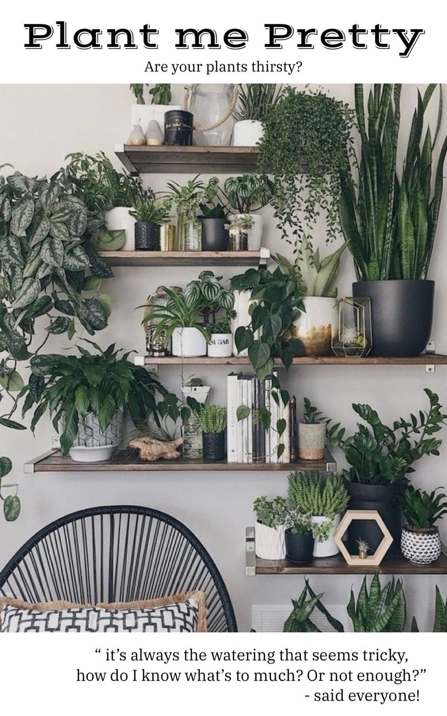 Are your plants thirsty?