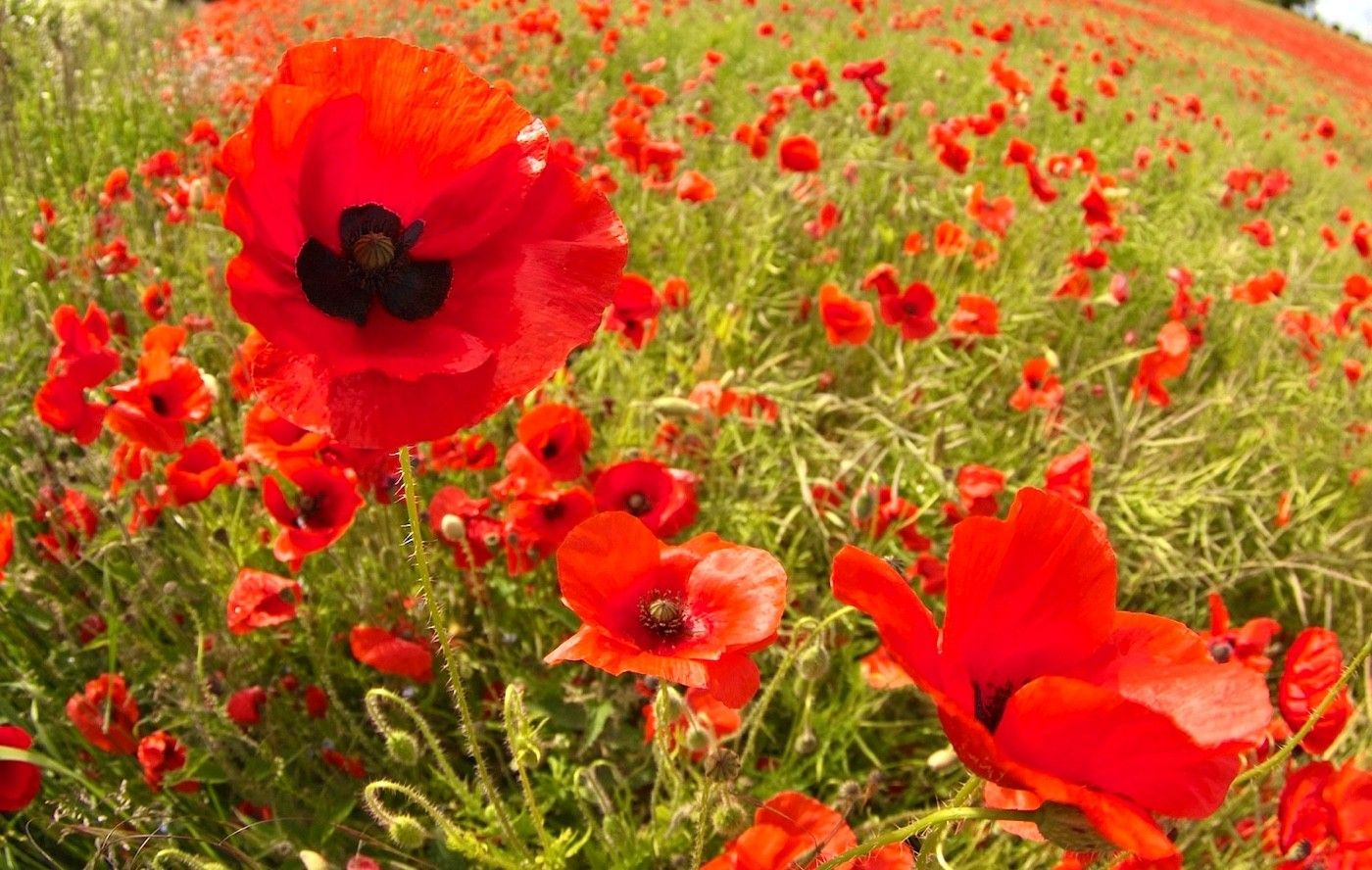 We passed many fields. The poppy fields were the best!