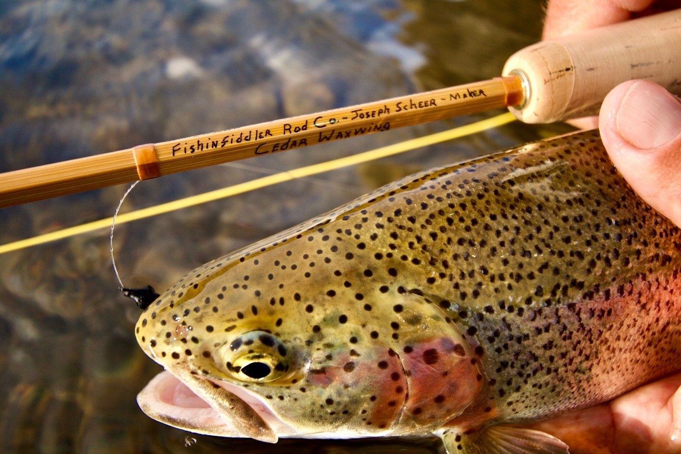You'll enjoy world-class trout fishing.